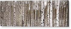 Tree Bark Acrylic Prints