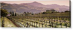 Asti Vineyards Photographs Acrylic Prints