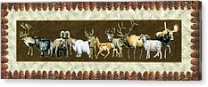 Mountain Goat Paintings Acrylic Prints