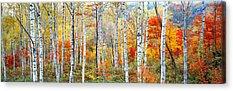 Colorful Image Acrylic Prints