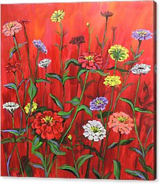 Zinnia Flower Acrylic Prints