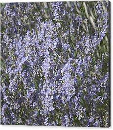 Botanical Acrylic Prints