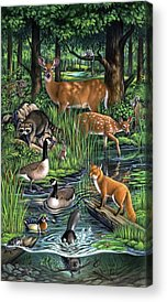 Canada Goose Acrylic Prints
