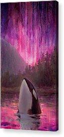 Killer Whales Acrylic Prints