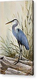 Shore Bird Acrylic Prints