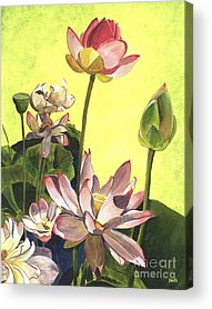 Pink Flowers Acrylic Prints