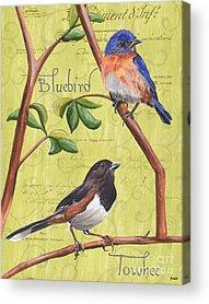 Bluebird Acrylic Prints