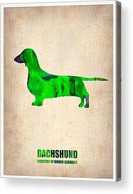 Dachshund Puppy Digital Art Acrylic Prints