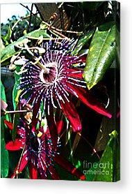 Daughter Cell Digital Art Acrylic Prints