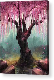Cherry Blossoms Digital Art Acrylic Prints