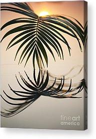 Palm Frond Acrylic Prints