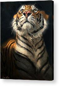 Tiger Acrylic Prints