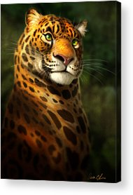Amazon Acrylic Prints