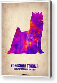 Yorkshire Terrier Acrylic Prints