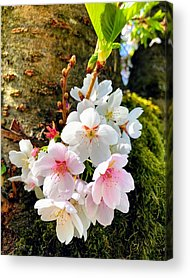 Apple Acrylic Prints