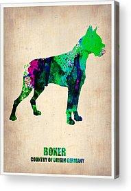Boxer Puppy Digital Art Acrylic Prints