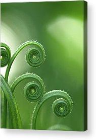 Garden Images Acrylic Prints