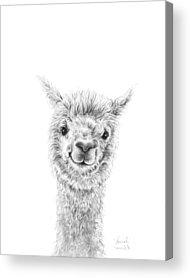 Alpacas Acrylic Prints
