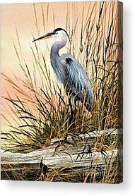 Heron Acrylic Prints