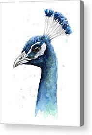 Peacocks Acrylic Prints