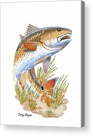 Fishy Acrylic Prints
