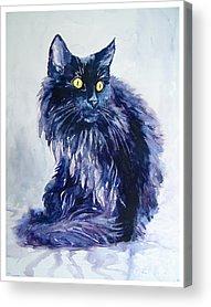 Persian Cat Acrylic Prints