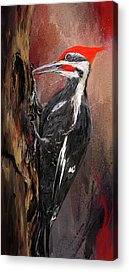 Pileated Woodpecker Acrylic Prints