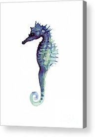Seahorse Paintings Acrylic Prints