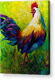 Livestock Acrylic Prints