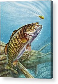Bass Acrylic Prints