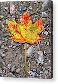 Mud Season Acrylic Prints