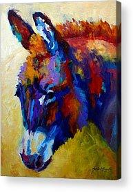 Donkey Acrylic Prints