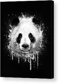 Panda Drawing Acrylic Prints