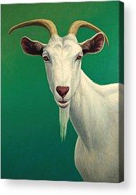 Farm Animals Acrylic Prints