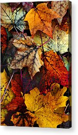 Fall Leaves Acrylic Prints