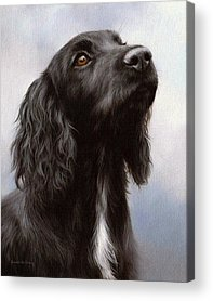 Cocker Spaniel Acrylic Prints