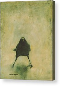 Crow Acrylic Prints