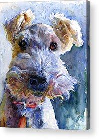Fox Terrier Acrylic Prints