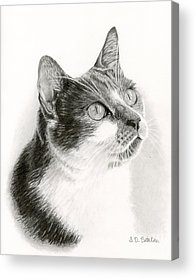 House Pet Drawings Acrylic Prints