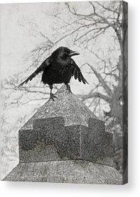 Gothicolors With Crows Acrylic Prints