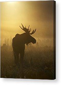 Rack Photographs Acrylic Prints