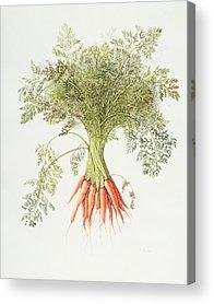 Carrot Acrylic Prints