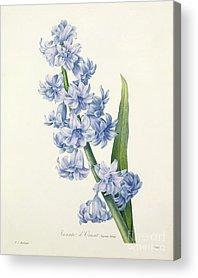 Nature Study Drawings Acrylic Prints