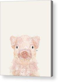 Pig Acrylic Prints