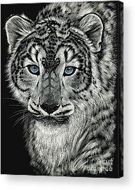Scratchboard Acrylic Prints