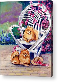 Pomeranian Acrylic Prints