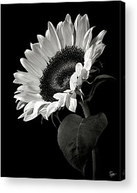 Black And White Acrylic Prints