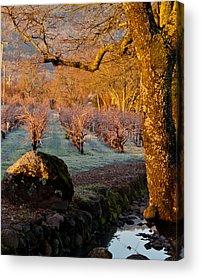Winerys Acrylic Prints