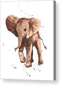 Baby Elephant Acrylic Prints