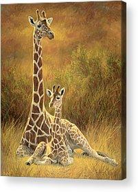 Calf Paintings Acrylic Prints